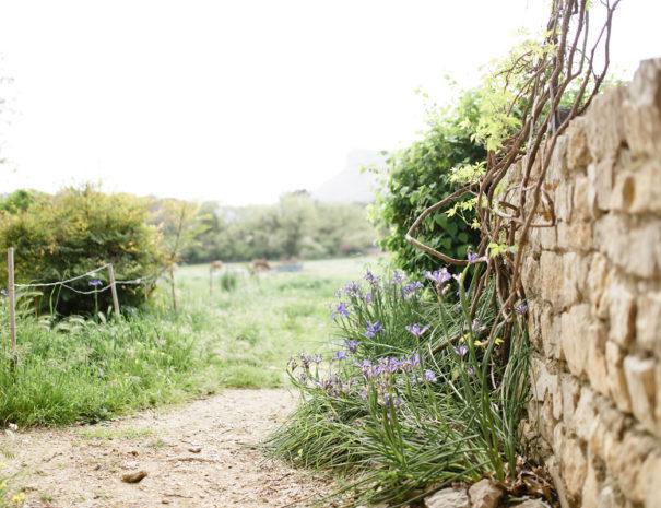 muret pierre seche Mas des Violettes